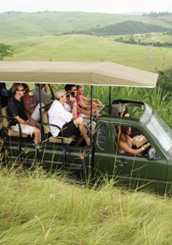 Game Drives | Rain Farm